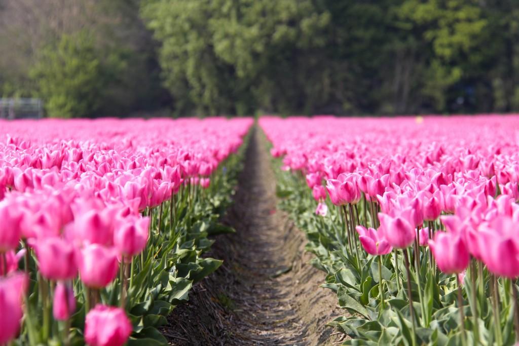 Bloemenveld-vrouw-van-waarde